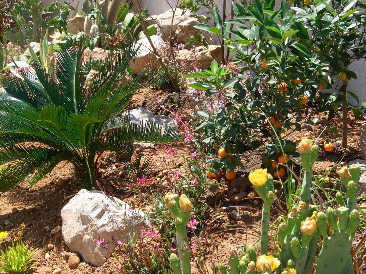 Optez pour un jardin sec les conseils kit mur v for Conseil pour le jardin