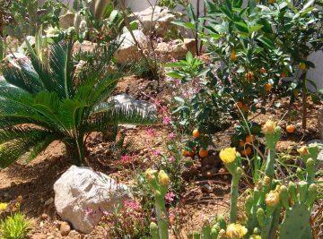 Opter pour un jardin sec