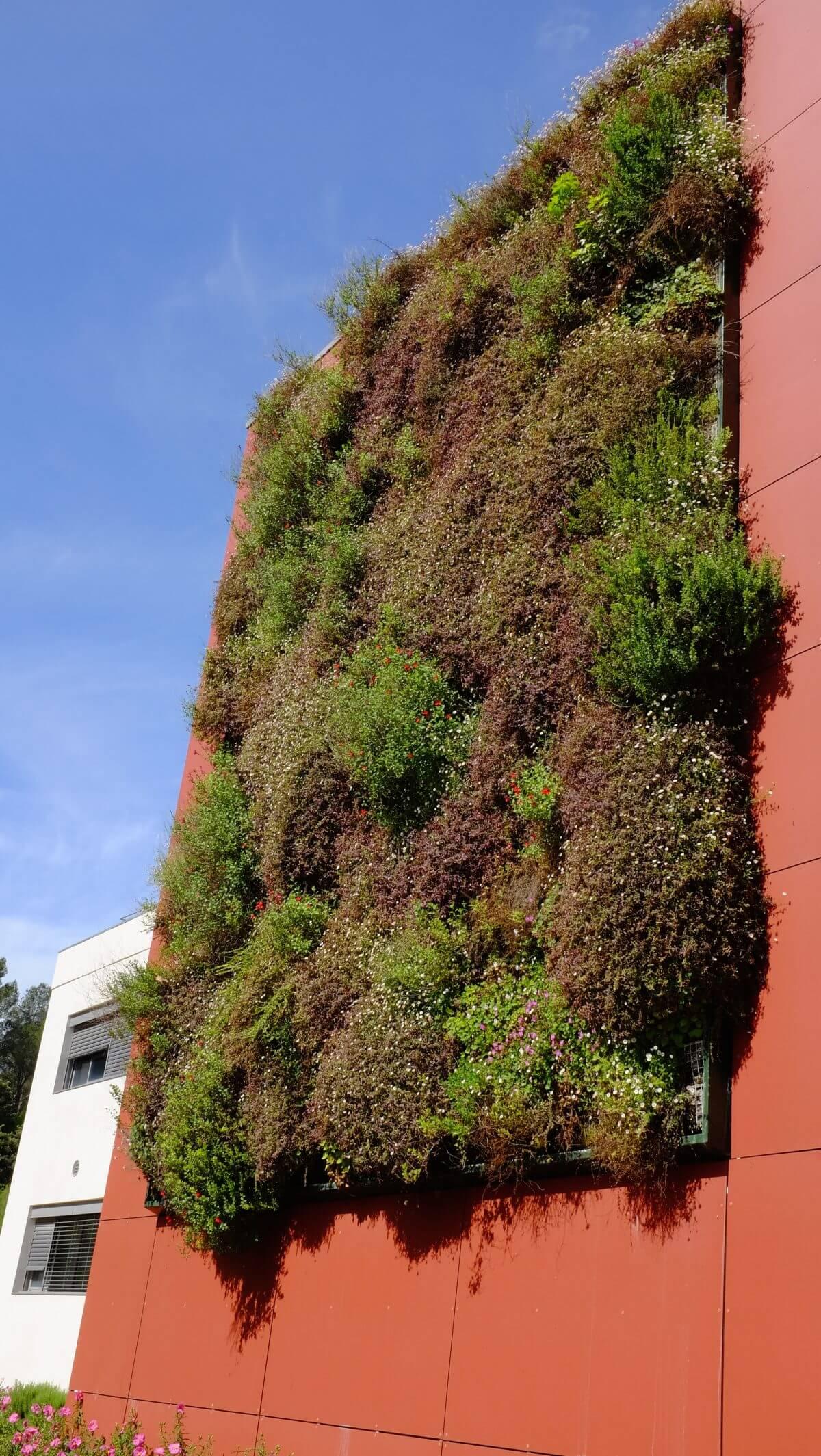 Mur Végétal Extérieur Palette quel prix pour votre mur végétal intérieur ou extérieur ?