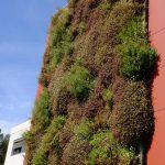 entretien mur végétal entreprise 34