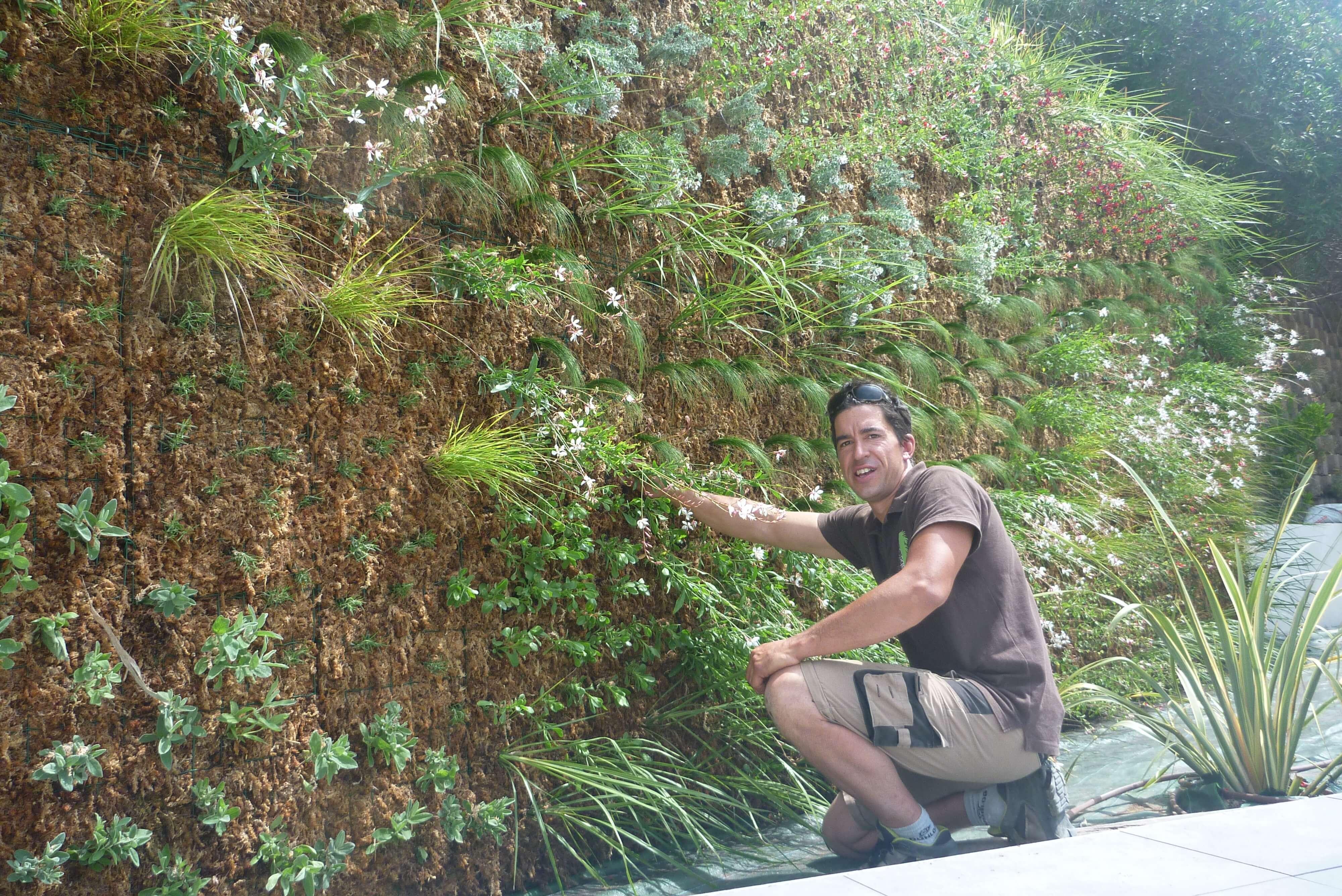 Entretenir son mur végétal