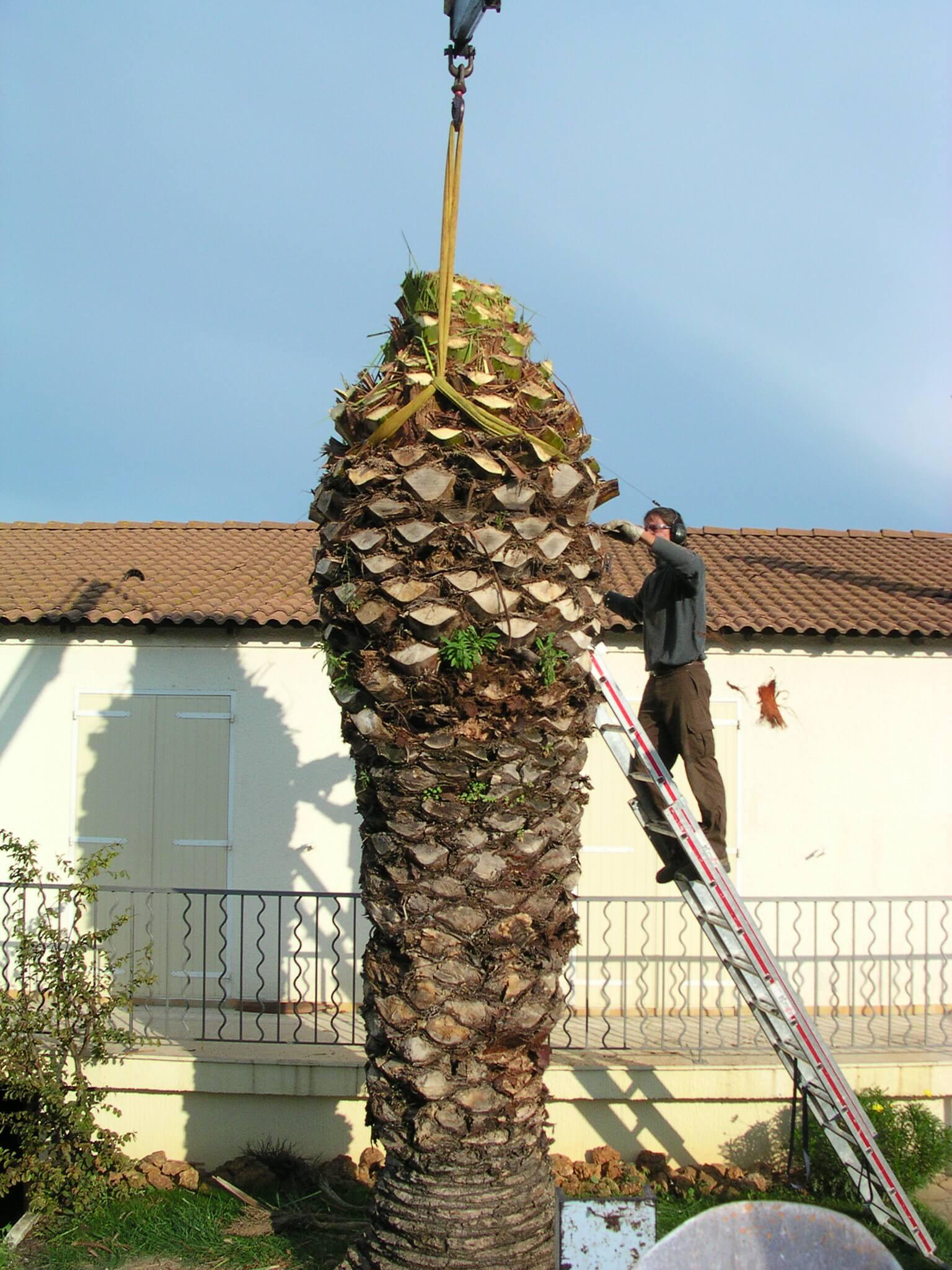 traitement palmiers papillons