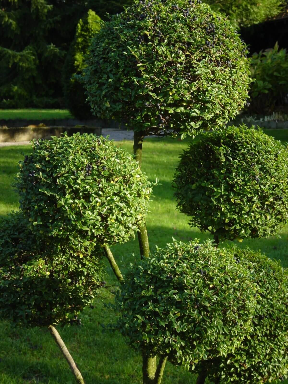 Entretien jardin montpellier confiez nous votre jardin for Contrat entretien jardin