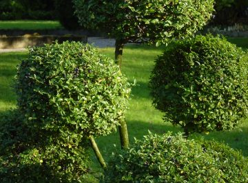 Entretien de jardin à Montpellier