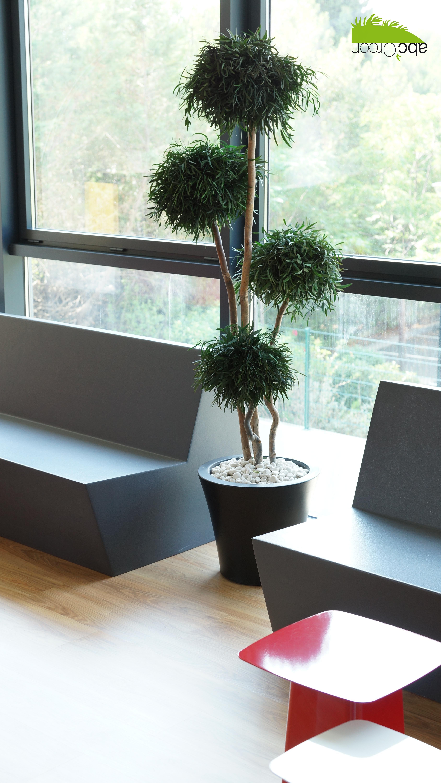 plantes stabilisées bureaux Montpellier
