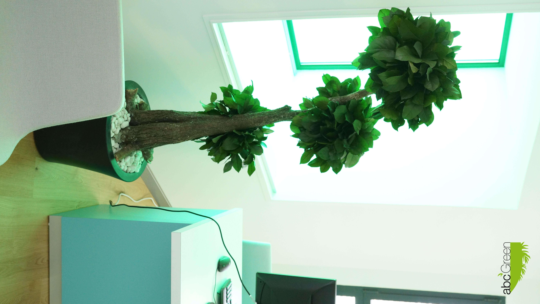 décoration bureaux 34