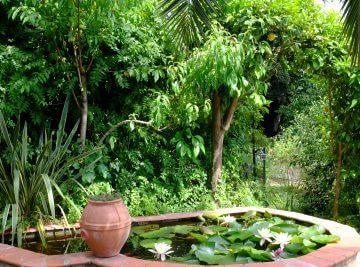 bassin jardin Montpellier
