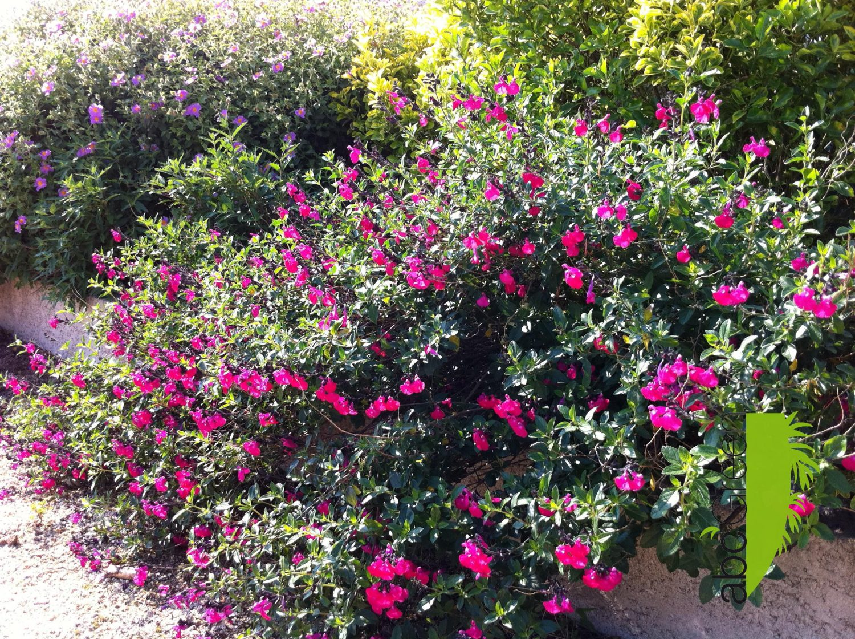 jardins secs Montpellier