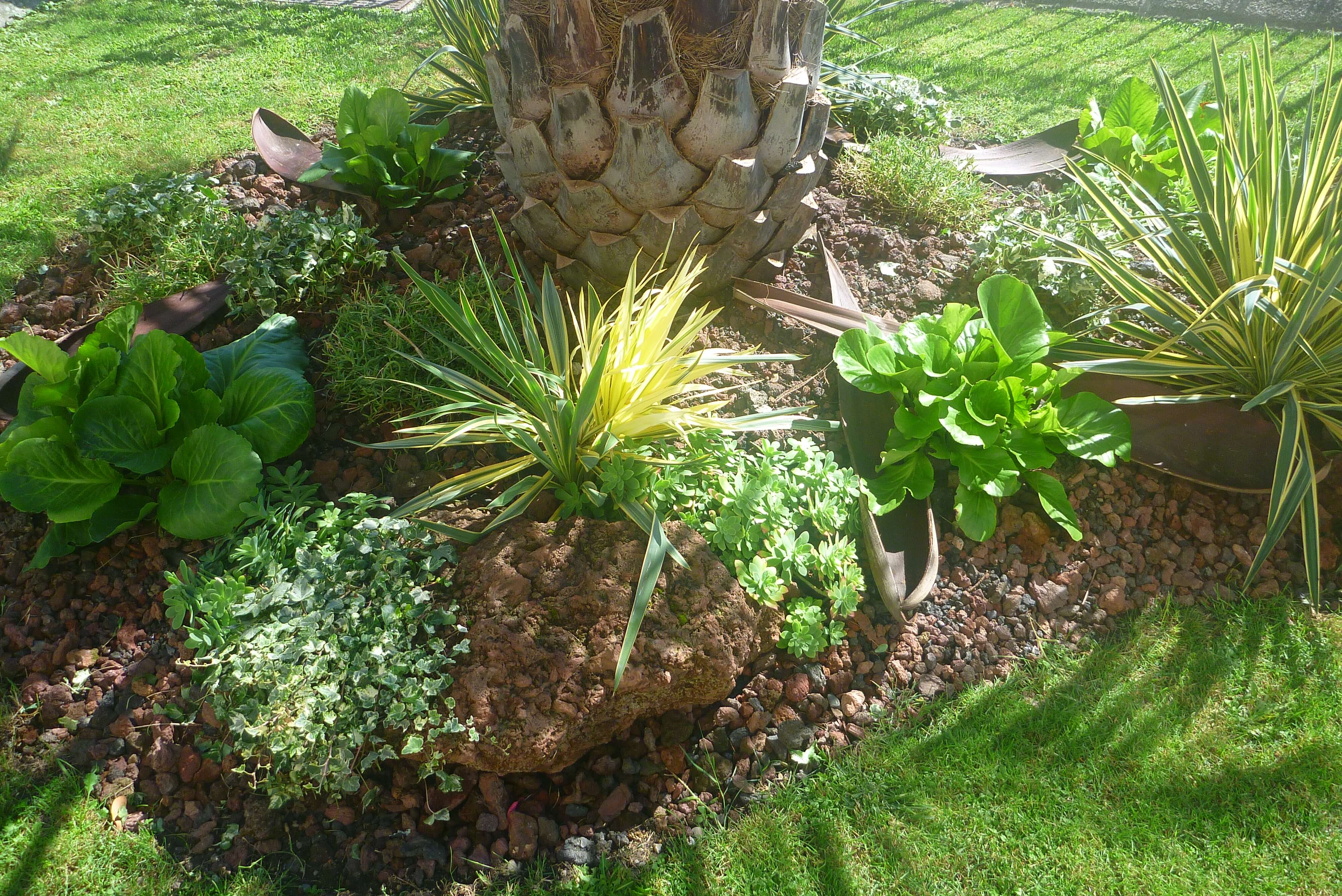 paysagiste palmier