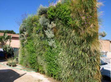 mur végétal extérieur 34