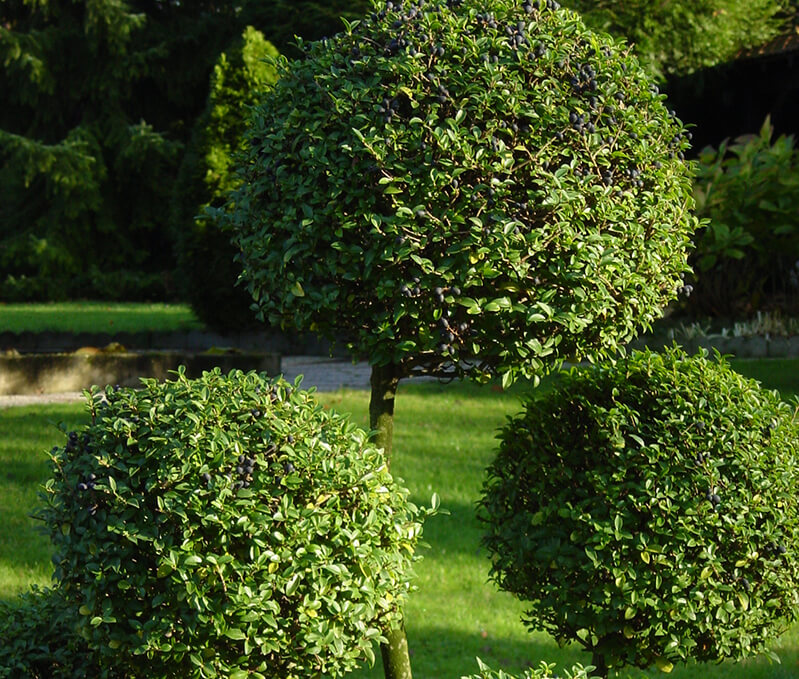 entretien jardin sète