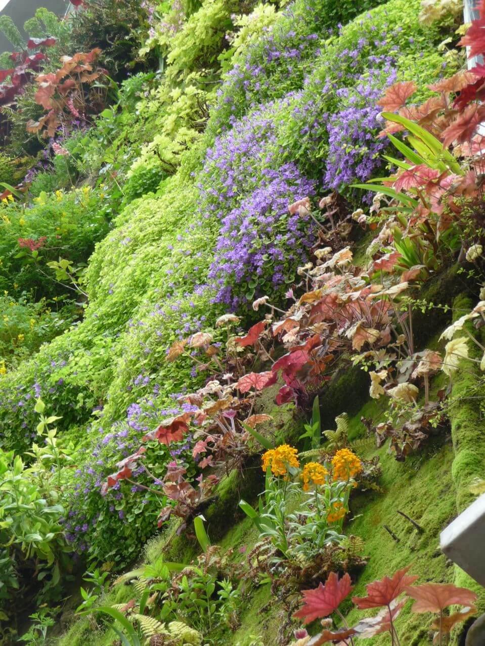 Plante Sur Les Murs mur végétal extérieur - kit mur vegetal