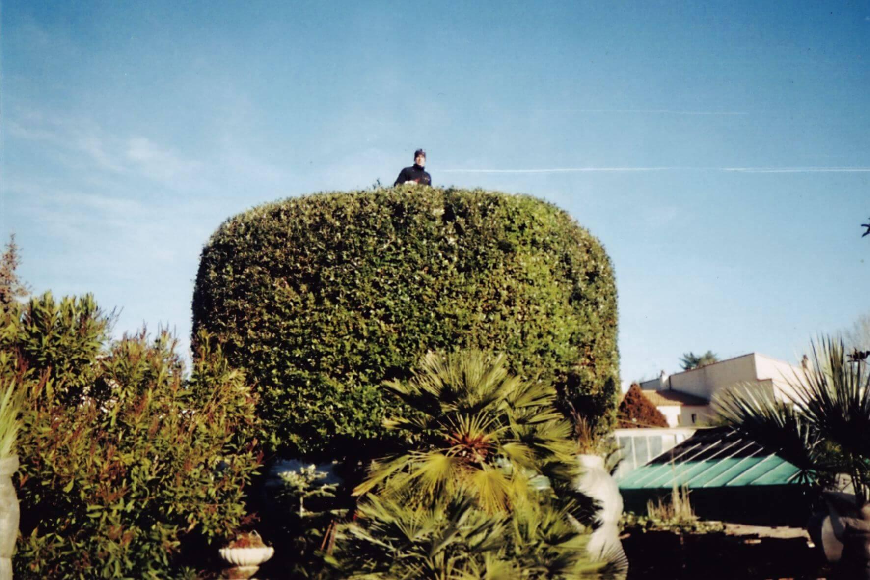 taille jardin Montpellier