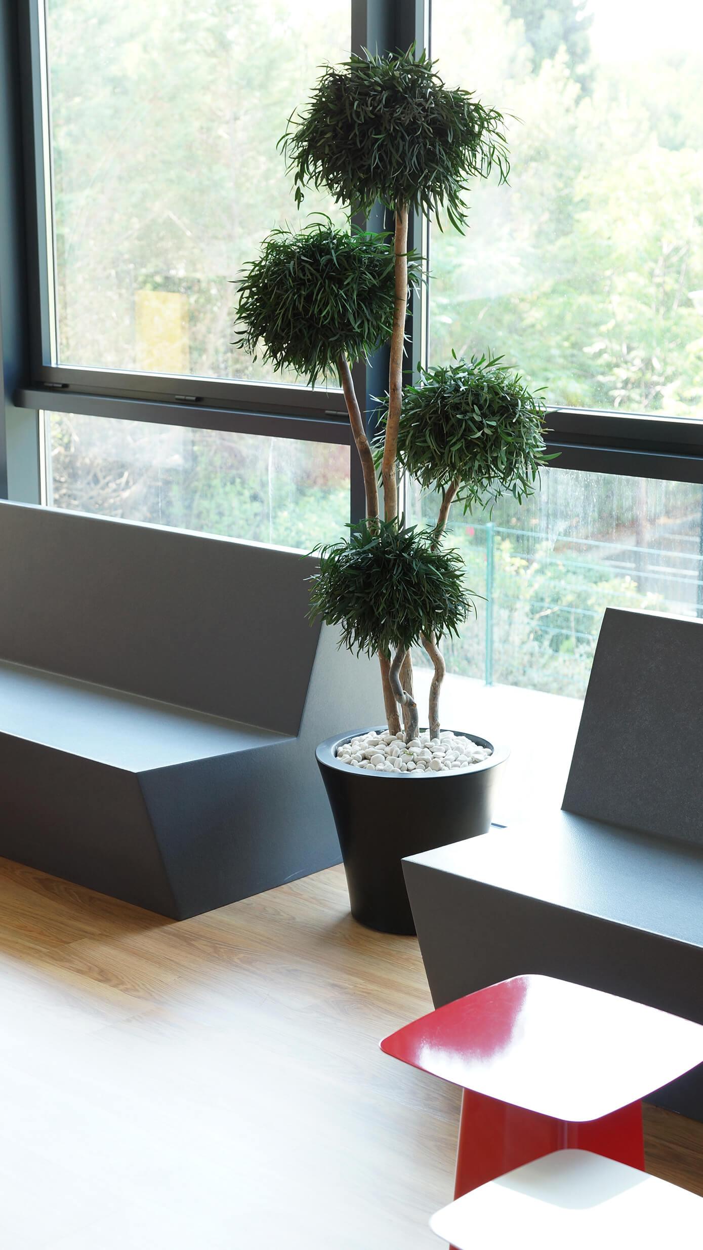 plante stabilisé abc green