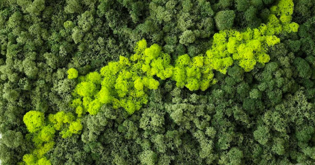 lichen mur végétal stabilisé