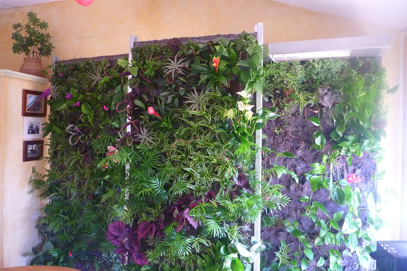 Mur Vegetal En Kit mur vegetal interieur - kit mur vegetal